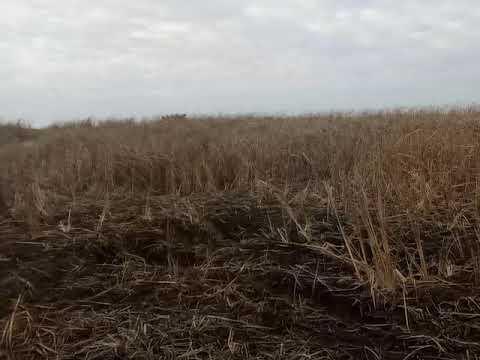 О чём договорились президенты Беларуси и Украины? - YouTube