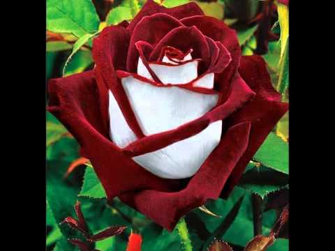 fiori bellissimi youtube