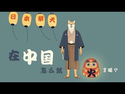 【视知百科】日本的柴犬在中国怎么就火了呢?