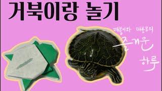 거북이랑 놀기-쿵푸사부가 꿈인 한 살 거북이, 우그웨이…