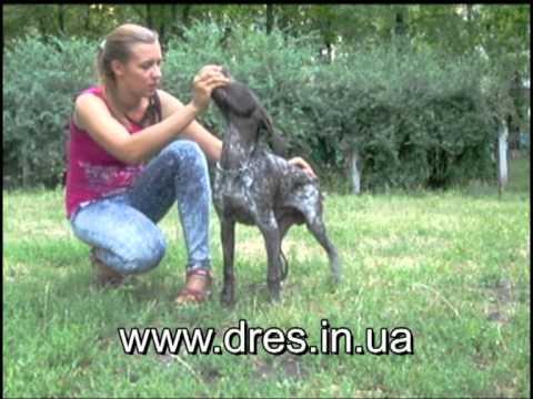 Вопрос: Как домашние животные копируют поведением своего хозяина?