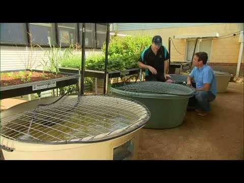 The Garden Gurus - Chickens And Fish
