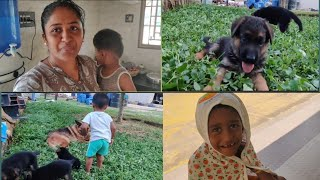 My Morning to Evening Routine with my kids || My pets cuteness overloaded || Simple lunch menu ||