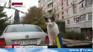 Любопытная кошка стала героем забавного ролика в сети