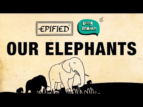 Our Elephants | Being Indian & Epified