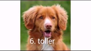 Top 10 mooiste honden