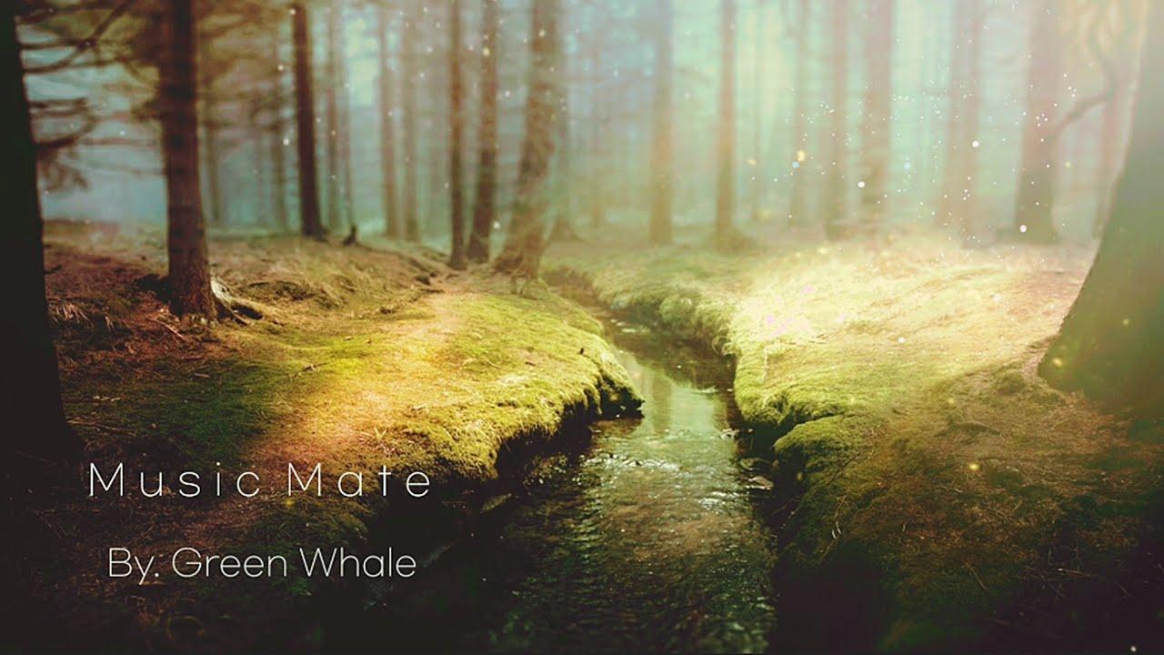 """스트레스 해소를 위한 숲속 명상음악☁치유음악,요가음악,아침명상음악,힐링음악 - """"Little Forest"""""""