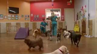 Fort Lauderdale Dog Grooming, Pet Boarding & Training - Ft. Lauderdale