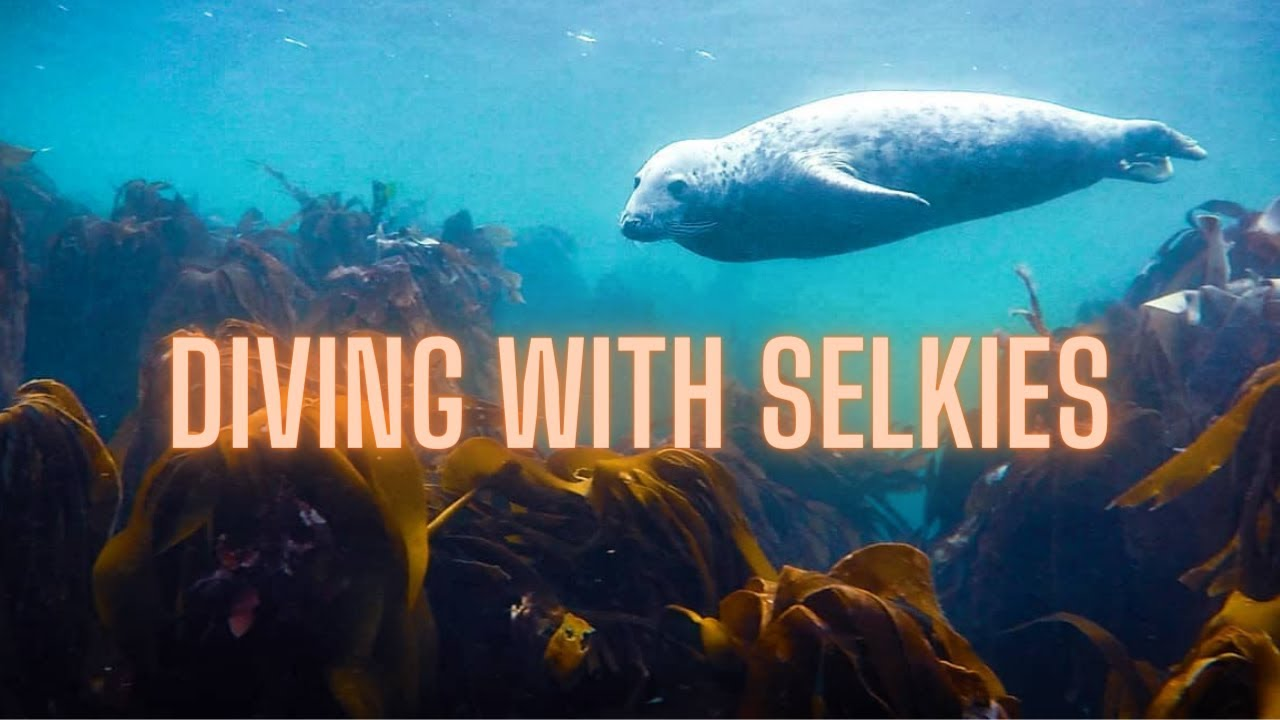 Diving with Seals in the Farne Islands