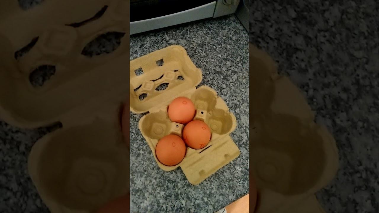 Hühnereier brüten