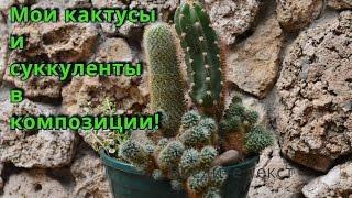 Кактусы и суккуленты!  Составляю композицию из суккулентов и кактусов!