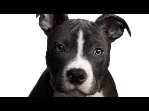 dogs-barking-sounds-effects-puppies-growling-crying-noises-playing-whining-funny-loudly-song-video