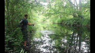 Exploring The Forgotten Ponds (Lure Fishing)