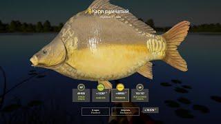 Русская рыбалка 4 RF4 Янтарное Карп рамчатый троф фарм