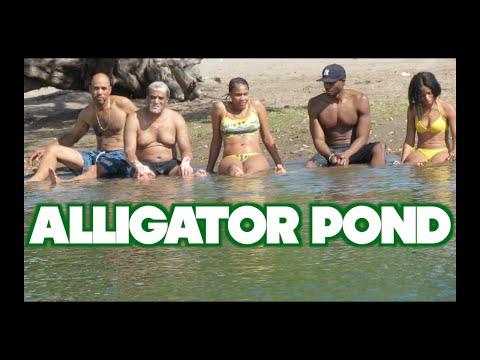 JAMAICA VLOG #68 ALLIGATOR POND