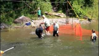 Bowmanville Creek Salmon Crossing 2012
