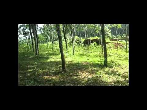 15 acre rubber estate for sale@Adoor Ezhamkulam