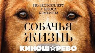 КИНОШАРЕВО. Собачья жизнь