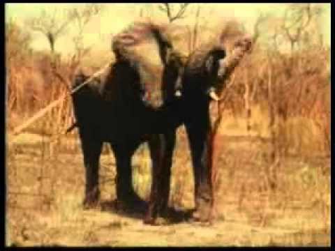 Elephant Spear Hunting