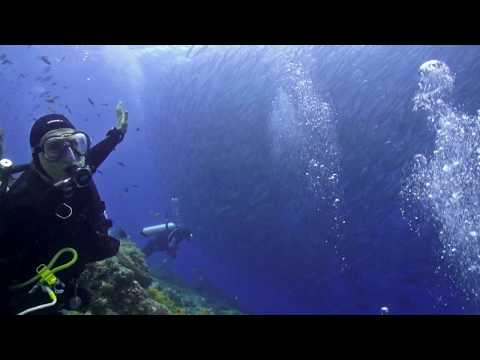 Seven hundred Barracudas, Nabucco, Maratua Atoll, Indonesia