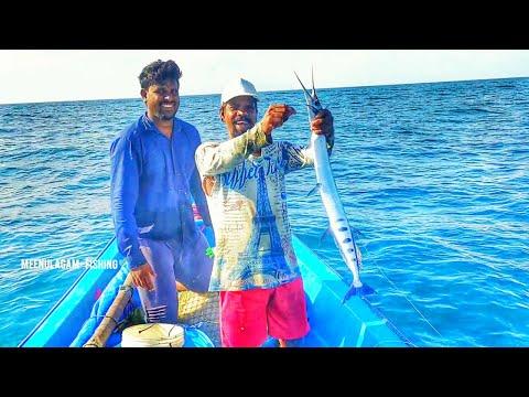 LONGLINE FISHING //CATCHING  GARFISHES  BACK TO BACK