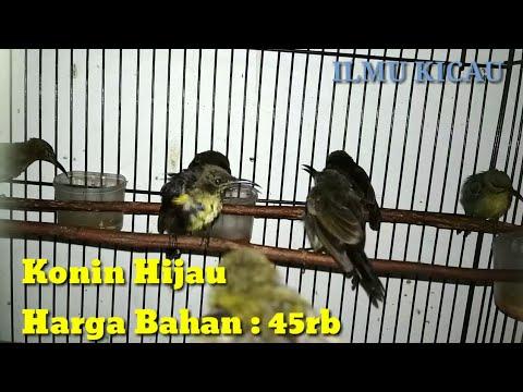 Ini lah Harga  Burung Kacer,  Murai , Cucak Hijau Bahan  Dan Lain lain !!!  Di Kios Kios Besar