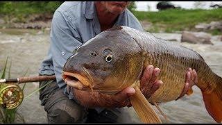 Câu cá hồ tự nhiên, gặp bầy chép đói mồi, Fishing carp - Fishing TV New