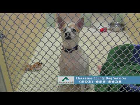 Adoptable Dogs in Clackamas County: Nov. 22- Nov. 29