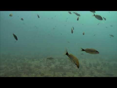 Sharks in the Atlantic Cam 05-21-2017 07:00:10 - 07:59:52