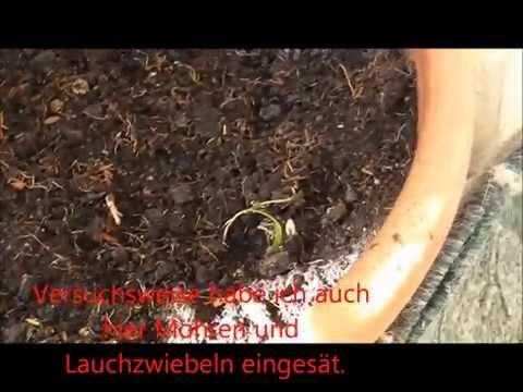 Balkongarten und Pflanzen August 2015 lautlos