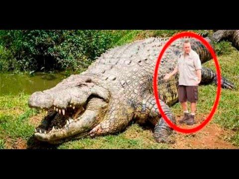 Top 7 animales mas grandes del mundo por especie youtube for Cual es el colchon mas grande