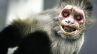 Le Zoo Infernal - Film COMPLET en Français (Thriller, Animaux Zombies)