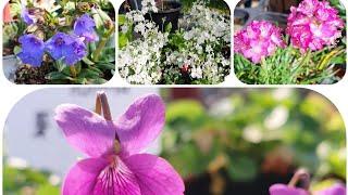 남사 나들목야생화농원 야생화꽃 이름과가격 아르메리아꽃 …