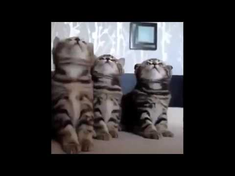 """FUNNY CATS - funny cat pranks videos """"funny cat reaction to fart"""" that will make you laugh so hard y"""