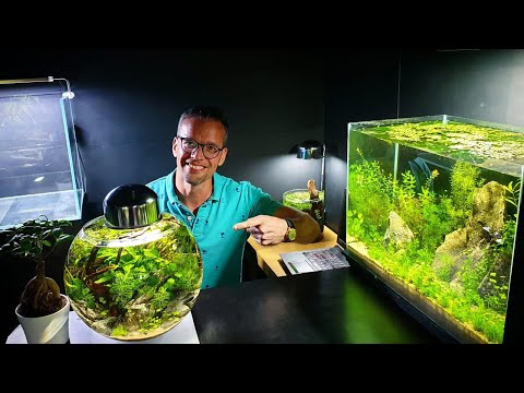 Super Low Tech Aquascape Tour With MD Fish Tanks
