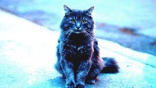Трогательная история жизни необычного кота