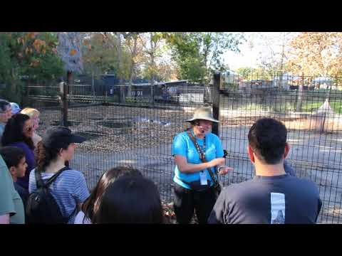 La Brea Tar Pits Scientific/historical Explanation In Los Angeles