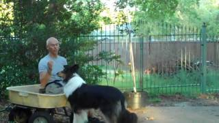 Dallas Dog Training | Redeeming Dogs | Reveille The Rough Collie, First Lesson