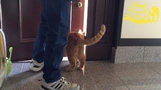 扉が開いた瞬間、弟妹猫けん玉たちはすぐ 出て行ったところ、ひろしはタ...