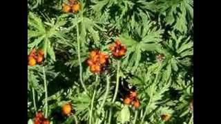 Perennial Garden Flower Tour
