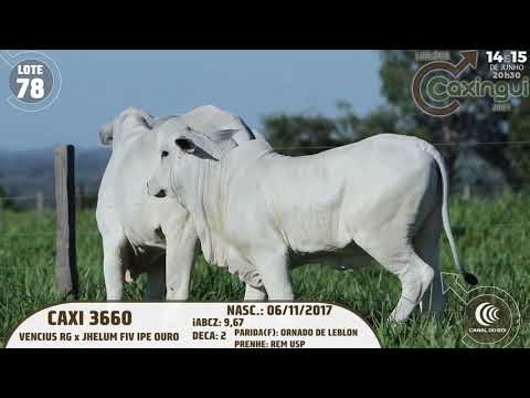 LOTE 78   CAXI 3660