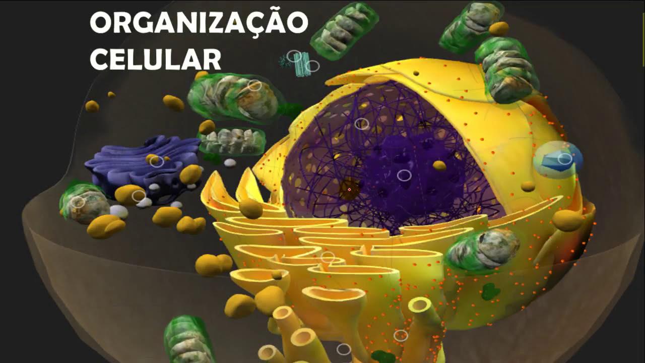 Organização Celular Dos Seres Vivos E Suas Organelas Estrutura Características E Funções