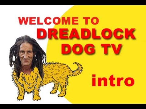 Dreadlock Dog TV Intro Episode