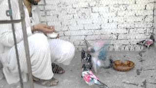 Repeat youtube video 2013 ke 3 cup Me Winer My Pigeon with My Cns Raja Shoaib