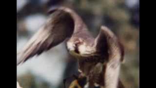 NATIONAL GEOGRAPHIC - DOCUMENTARIO UCCELLI RAPACI [ITA] DOCUMENTARY BIRDS OF PREY] ASSASSINI VOLANTI
