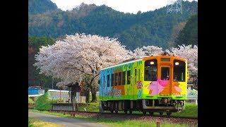 樽見鉄道 〜桜が満開な鉄路を行く列車達〜