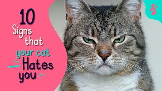 💔 10 Signs That Your Cat Really HATES You | Furry Feline Facts 😾😿