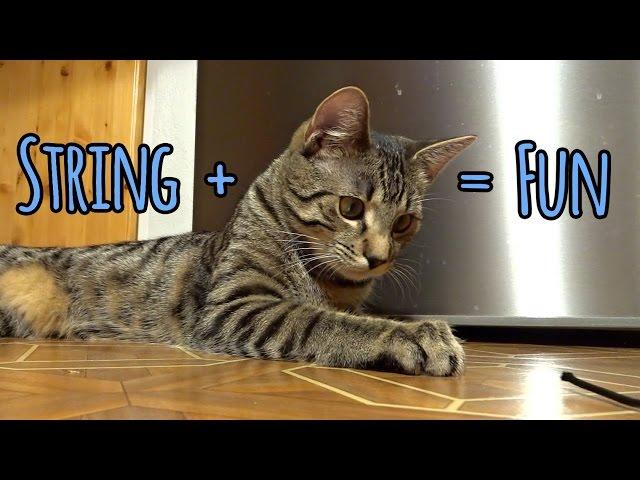String + Kitten = Fun