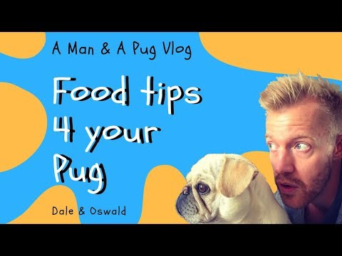 Top Food Tips For Your Pug