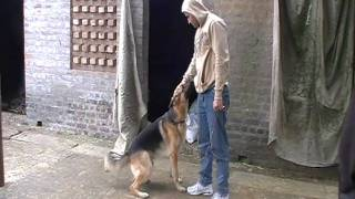 German Shepherd Punjab India
